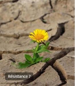 SOUCI RESISTANCE.jpg