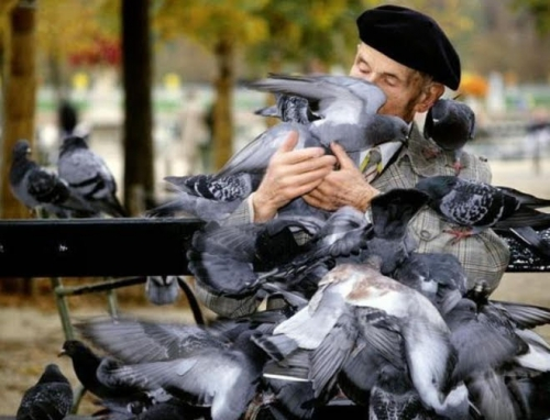 oiseaux migrants.jpg